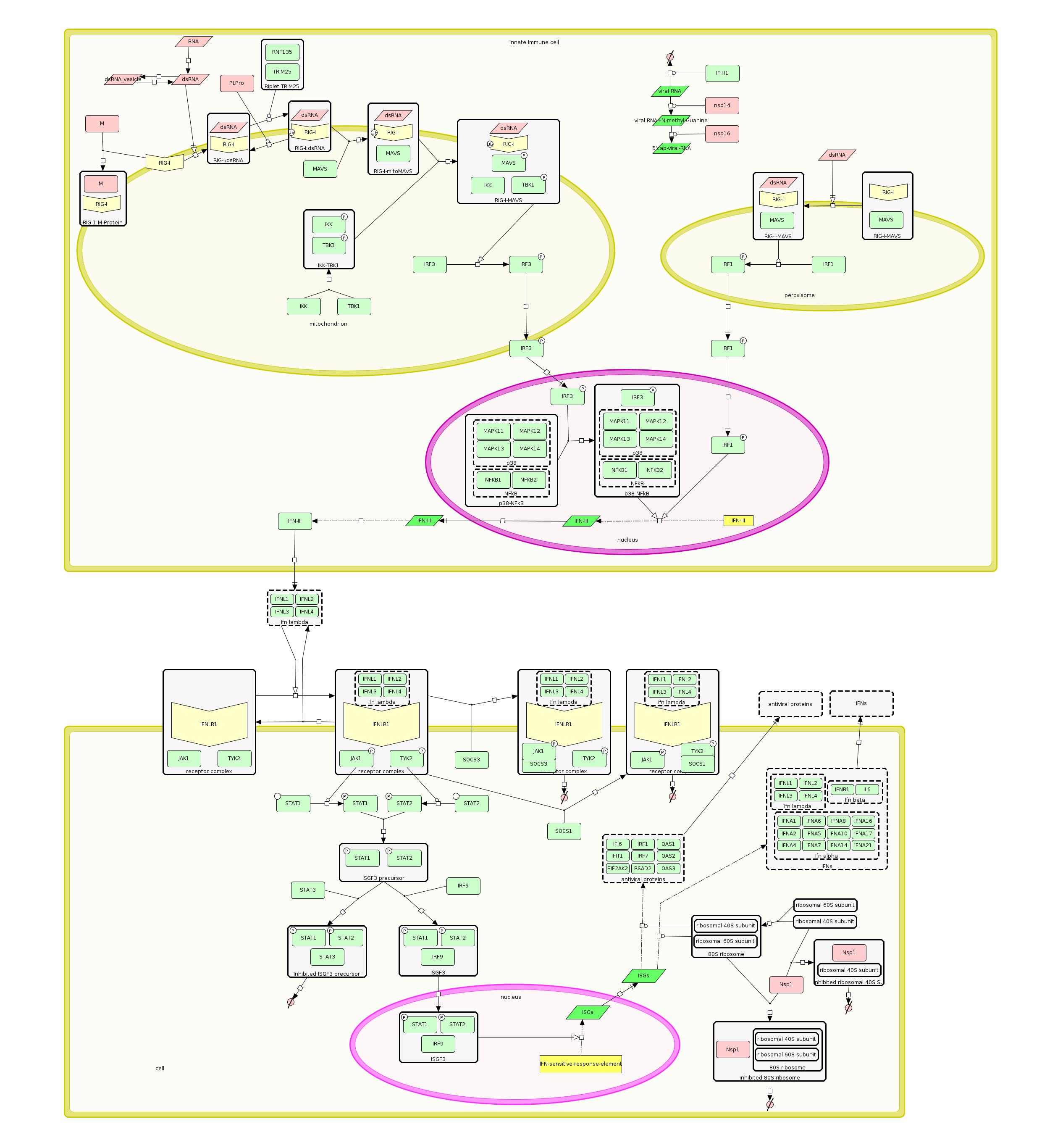Curation/Interferon lambda pathway/IFN-lambda_stable.png
